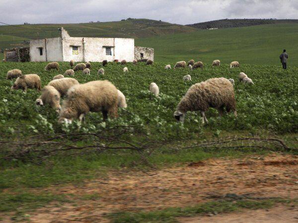 Ifrane en Marruecos