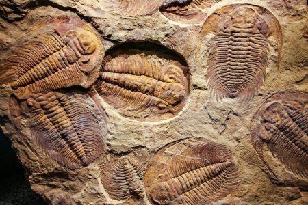 Fósiles de Erfoud con nuestros viajes privados y de grupo al desierto desde Fez