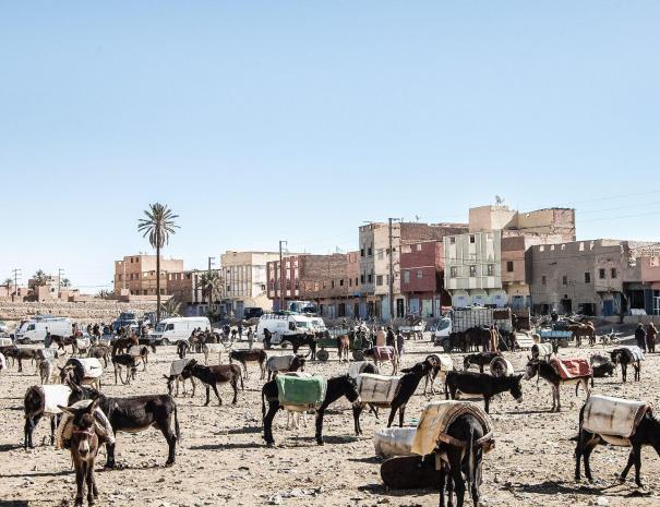 excursiones por el desierto desde casablanca