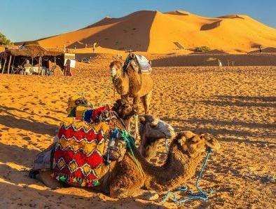 Camellos con nuestro viaje de 4 días en Marruecos Desde Fez a Marrakech