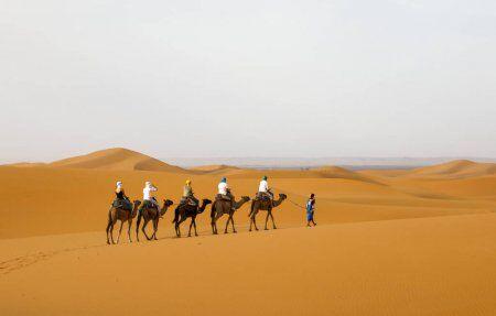 camellos en el desierto con itinerario marruecos 7 dias