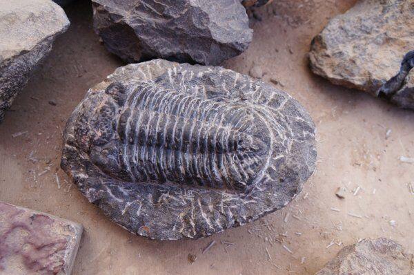 los fossiles in Erfoud con nuestro Ruta de 2 semanas en Marruecos