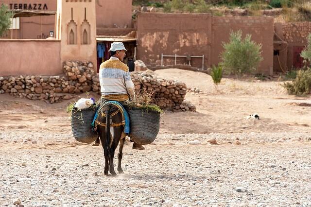 borros con nuestro burro que lleva madera en Rissani, un destino que visitaremos con nuestro ruta de Marrakech 6 dias