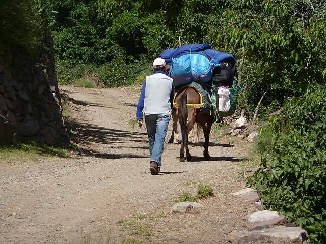 burro que lleva madera en Rissani, un destino que visitaremos con nuestro ruta de Marrakech 6 dias