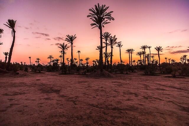 Las palmas del desierto con nuestro Circuito de 5 dias desde Marrakesh a Fez via Al desierto de Merzouga.