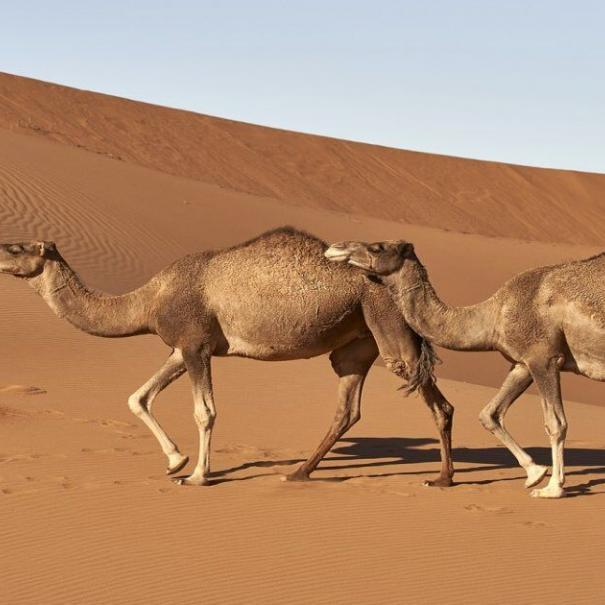 Tours En Marruecos, 3 días desde Fez a Marrakech