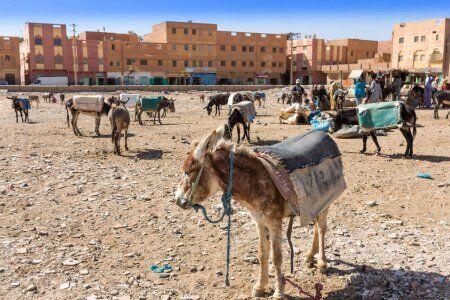 burros en rissani un sitio que exploraremos con nuestro ruta de 12 dias por Marruecos itinerario de viaje desde Casablanca.