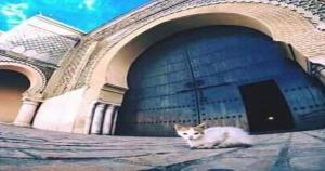Plaza de Meknes de lhdim, lo mejor es pasear por sus zocos
