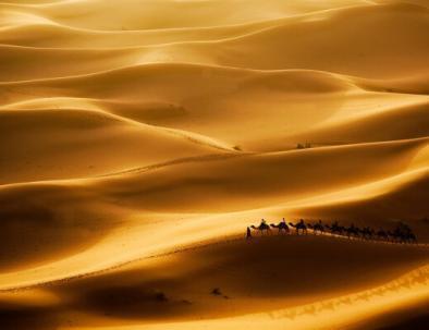 Giro del cammello in Marocco
