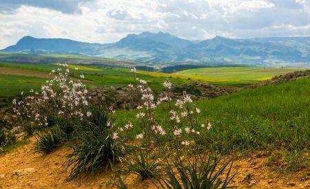 montagne verdi in Marocco
