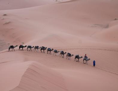 Caravana de camello con Blog di viaggio Marocco