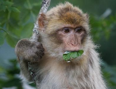 macaco del quarnaro con il nostro tour di 4 giorni da marrakech a fes