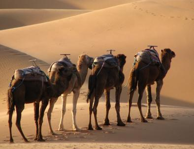 gite in cammello a marrakech a fes tour del deserto