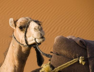 Giro in cammello in mezzo al deserto al momento della prenotazione del tour di 3 giorni da Marrakech