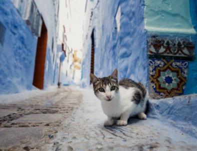 un gatto in chefchaouen