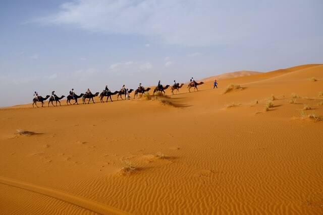 carovana di cammelli in mezzo al deserto del Sahara di Merzouga