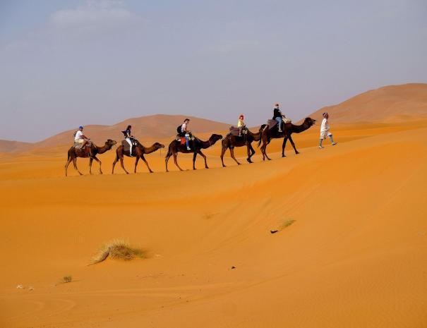 carovana di cammelli,