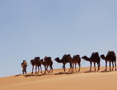 carovana di cammelli a Merzouga, la migliore esperienza che avrete con i nostri viaggi ed escursioni da Tangeri