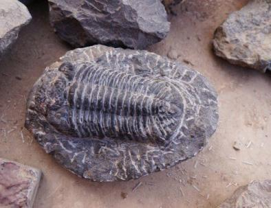 fossili ad arfoud, una città vicino a merzouga il deserto del sahara