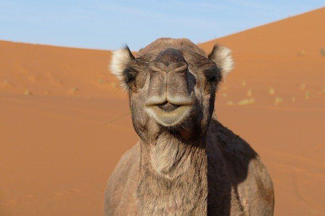 4 giorni di tour nel deserto da marrakech a fes
