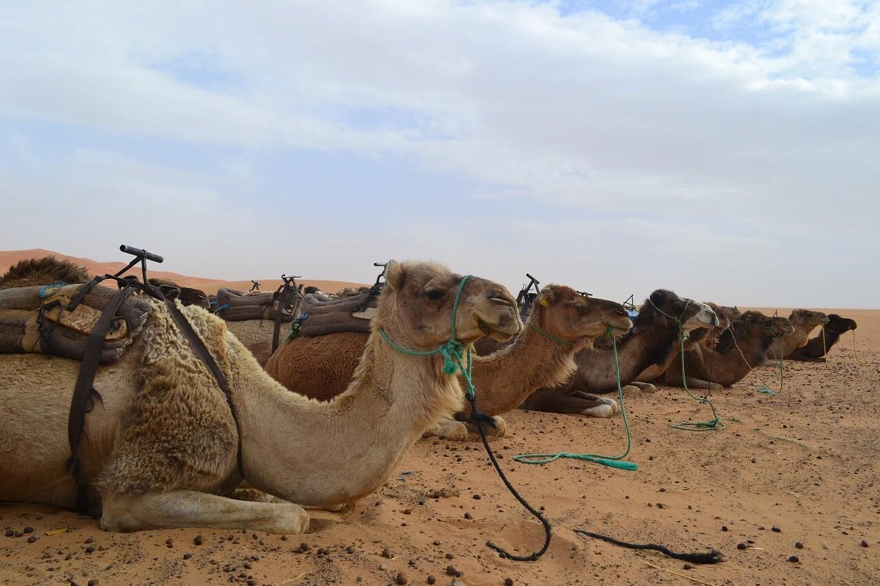 Deserto di Zagora con l'agenzia di viaggi Marocco