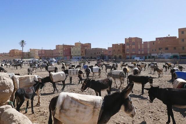 circuiti da marrakech al deserto