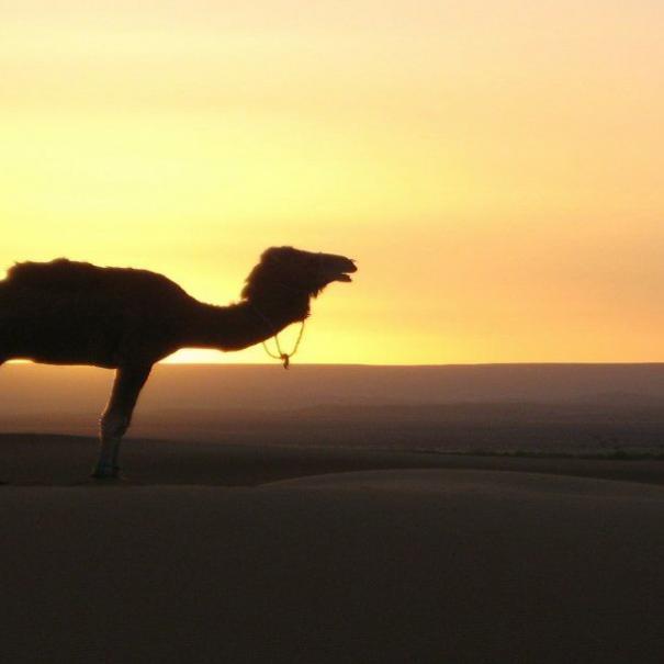 Tour In Marocco 2 giorno da Fes a Merzouga deserto