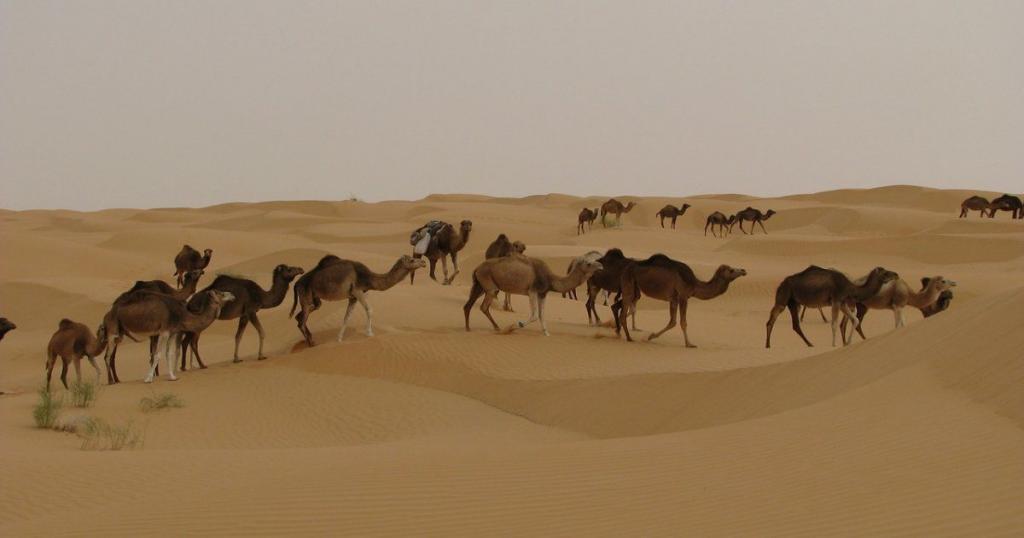 attrazioni del Marocco, il deserto del Sahara