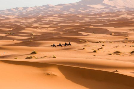 camels crossing the sand dunes, picture is taken from our 12 days tour from Casablanca and Morocco itinerary