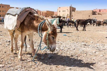The donkey parking at Rissani, one of the amazing places to explore with our 2 week Morocco itinerary