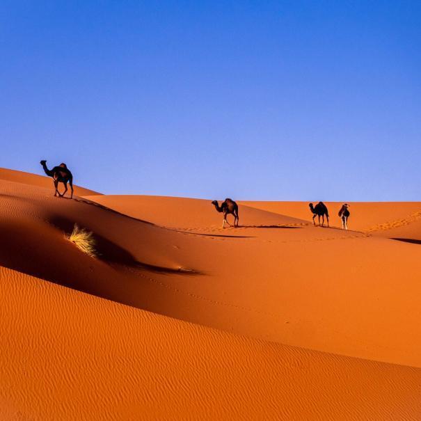 desert tours from Casablanca