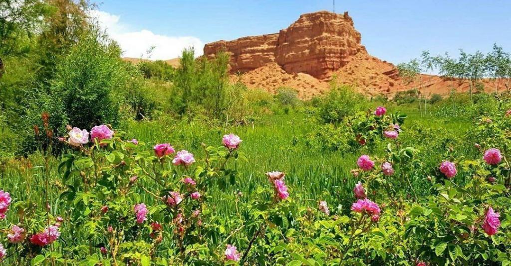 Rose valley, we will pass by it with our Morocco 8 days itinerary from Casablanca