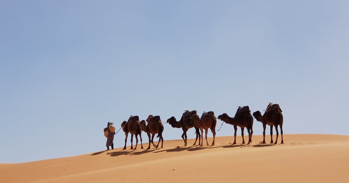 Camel caravan with our 9 days in Mrocco itinerary