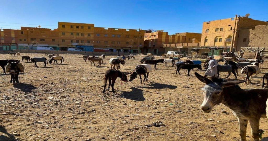 the donkeys parking at Rissani near the erg chebbi dunes