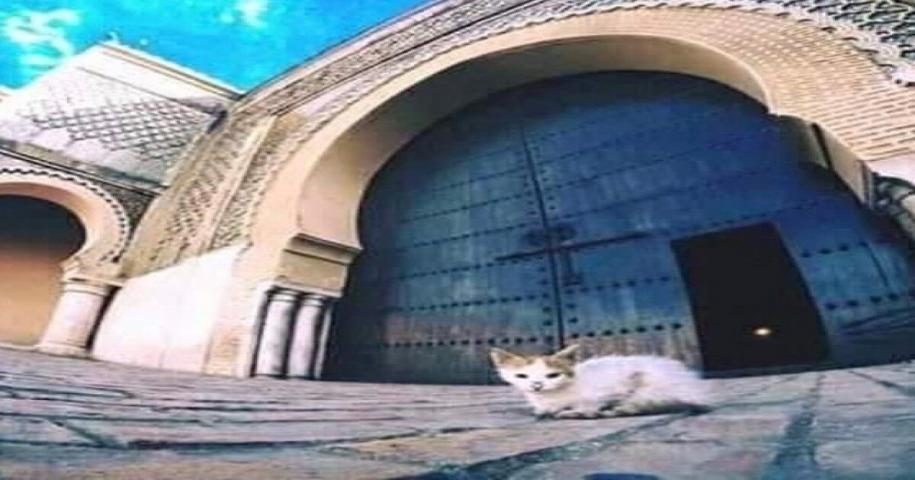 The best thing to do in Meknes is to visit the gate of Bab El Mansour